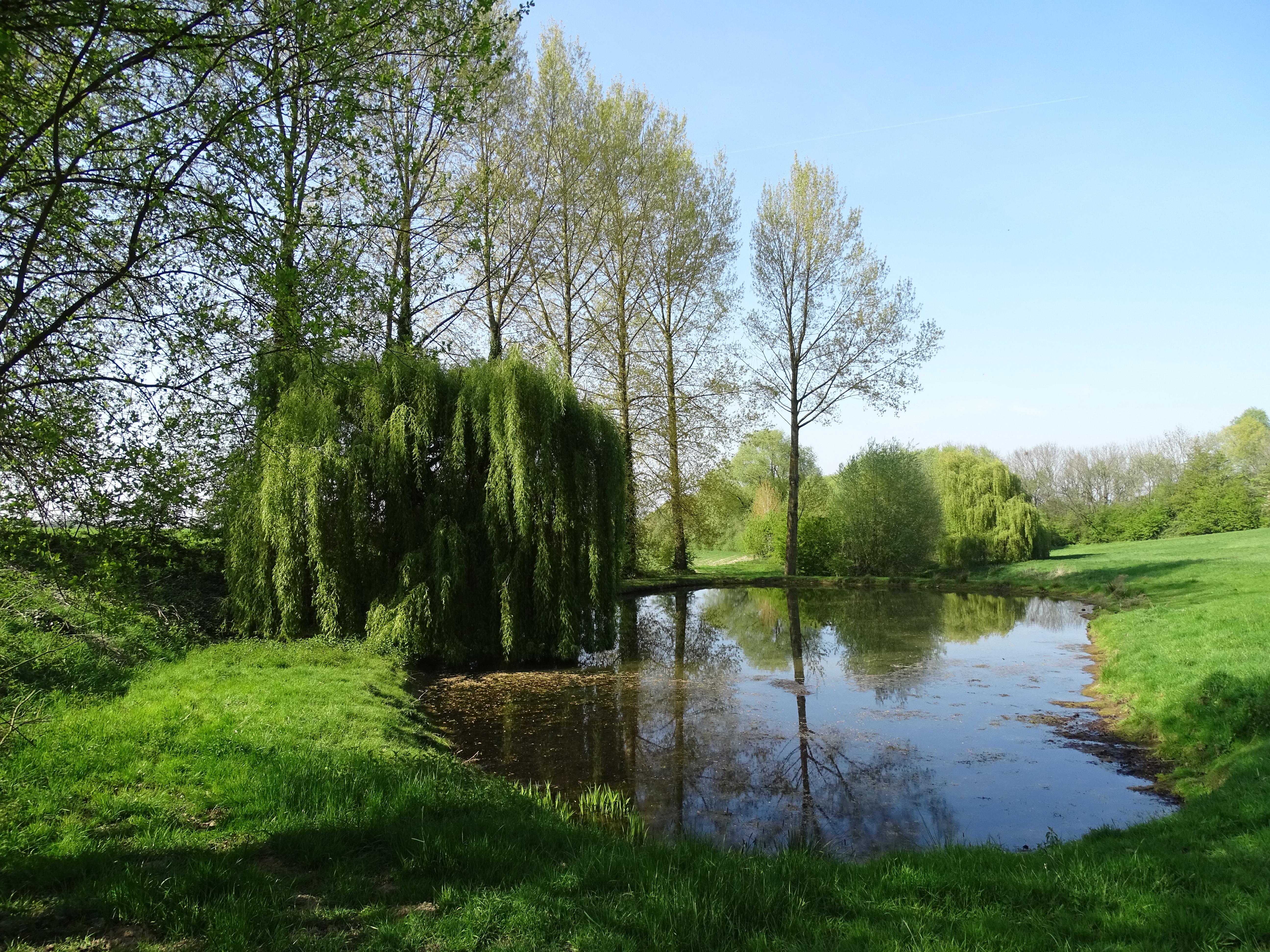 Jardin hameau de favarge - Comment supprimer le liseron au jardin ...